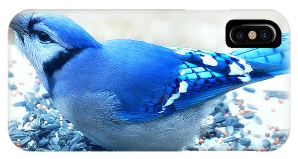 Bright Blue Jay  IPhone Case