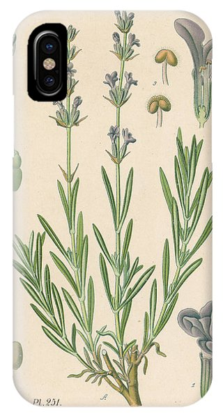 Lavender iPhone Case -  Common Lavender Indistinguishable by Mary Evans Picture Library