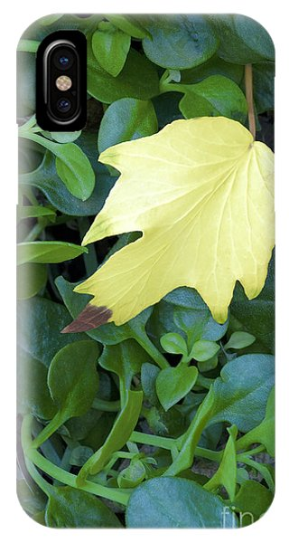 Fallen Yellow Leaf IPhone Case