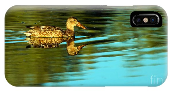Northern Shoveler Duck IPhone Case