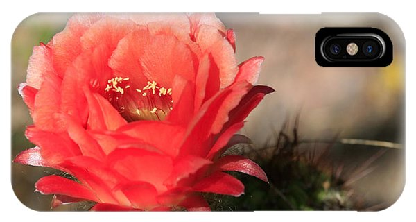 Red  Cacti Flower IPhone Case