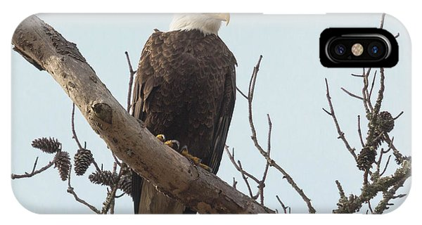 Resting Bald Eagle IPhone Case