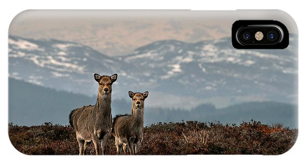IPhone Case featuring the photograph    Sika Deer by Gavin Macrae