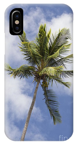 IPhone Case featuring the photograph  Sky And Palm Tree With Coconuts by Bryan Mullennix