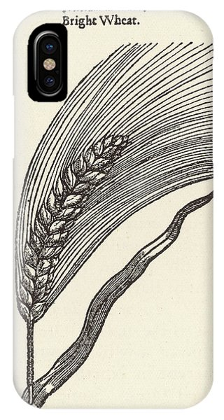 Triticum Lucidum  Bright Wheat Phone Case by Mary Evans Picture Library