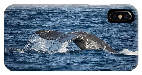 Whale Fluke In Dana Point IPhone Case