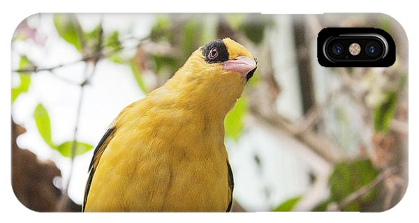 Yellow Songbird IPhone Case