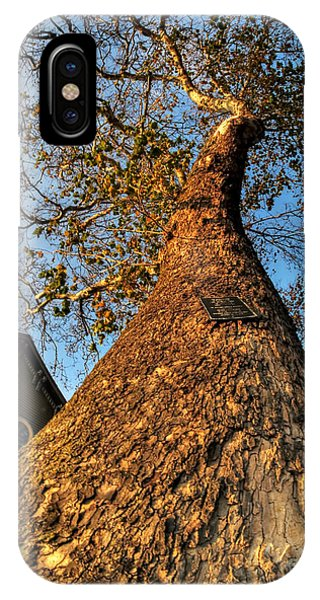 001 Oldest Tree Believed To Be Here In The Q.c. Series IPhone Case