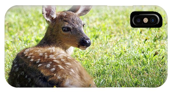 A Fawn On The Lawn IPhone Case