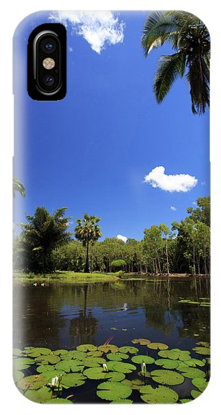 Far North Queensland iPhone Case - A Palm Tree On The Shore Of The Salt by Paul Dymond