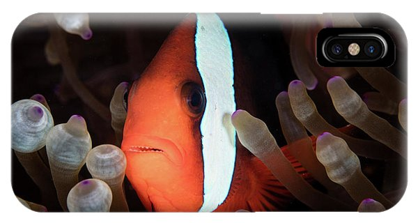 Amphiprion Melanopus iPhone Case - A Red And Black Anemonefish Swims Among by Ethan Daniels