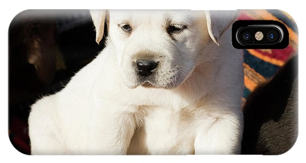 Yellow Lab iPhone Case - A Yellow Labrador Retriever Puppy by Zandria Muench Beraldo