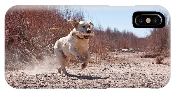 Yellow Lab iPhone Case - A Yellow Labrador Retriever Running by Zandria Muench Beraldo