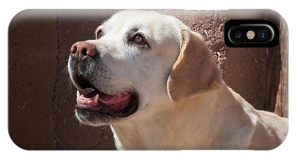 Yellow Lab iPhone Case - A Yellow Labrador Retriever Standing by Zandria Muench Beraldo