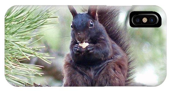 Aberts Squirrel IPhone Case