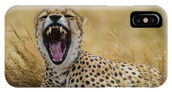 Cheetah iPhone Case - Africa Tanzania Cheetah (acinonyx by Ralph H. Bendjebar