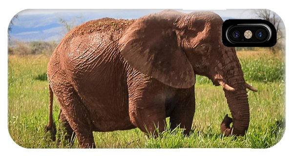 African Desert Elephant IPhone Case