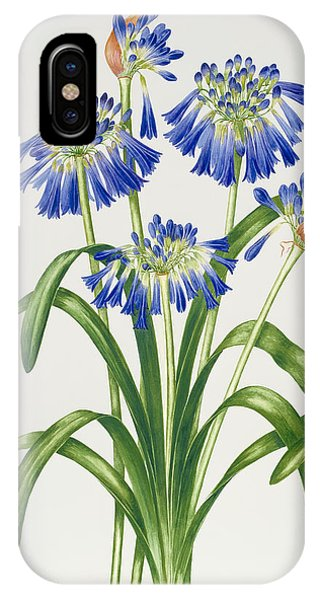 Violet iPhone Case - Agapanthus by Sally Crosthwaite