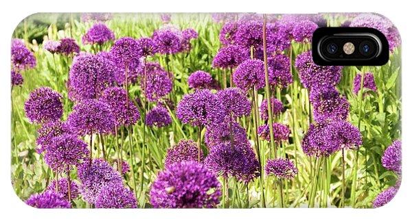 Allium Hollandicum 'purple Sensation' IPhone Case