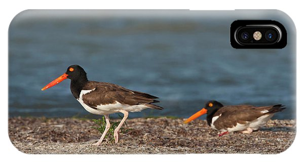 Oyster Bar iPhone Case - American Oystercatcher (haematopus by Larry Ditto