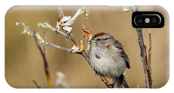 American Tree Sparrow IPhone Case