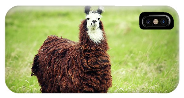 Llama iPhone Case - An Alpaca Vicugna Pacos Poses by Todd Korol