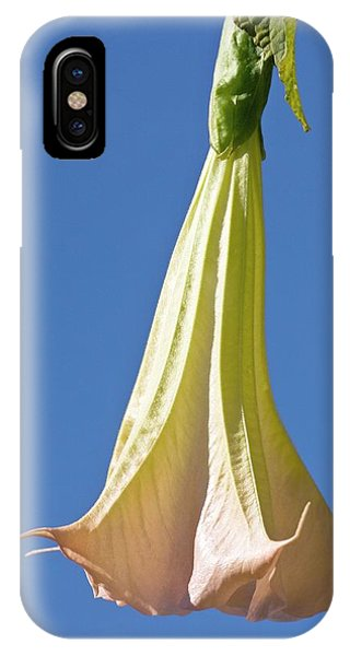 Yellow Trumpet iPhone Case - Angel's Trumpet (brugmansia X Candida) by Dan Sams/science Photo Library
