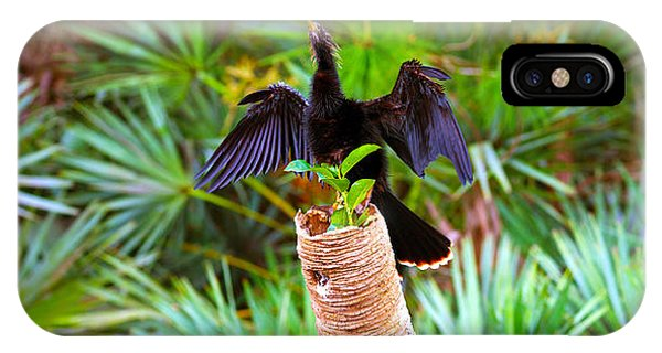 Anhinga iPhone Case - Anhinga Anhinga Anhinga On A Tree by Panoramic Images