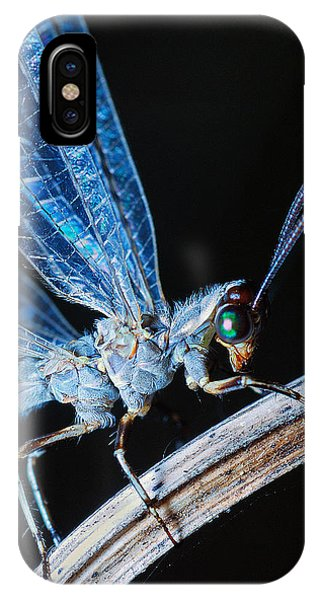 Antlion IPhone Case
