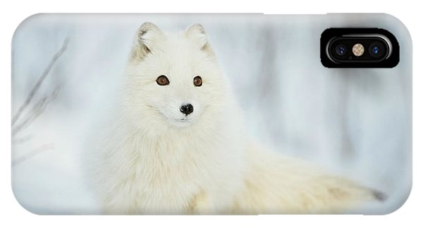 Arctic Fox In The Snow Phone Case by Dr P. Marazzi/science Photo Library