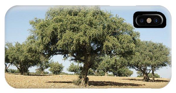 Argan Trees Argania Spinosa IPhone Case