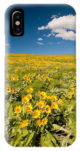 Arrowleaf Balsamroot IPhone Case