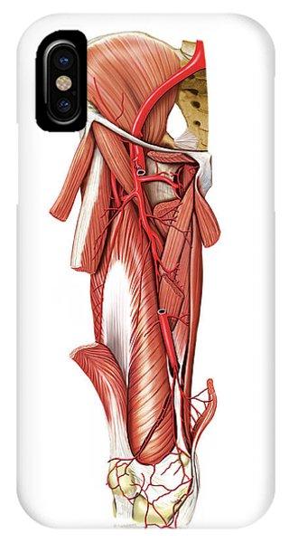 External Iliac Artery iPhone Cases   Fine Art America