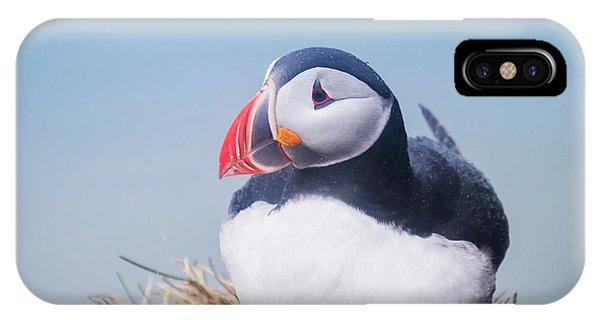 Atlantic Puffin Fratercula Arctica IPhone Case