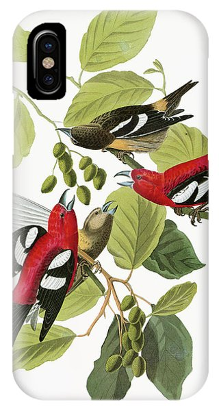 Audubon Crossbill IPhone Case