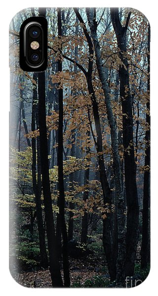 Autumn In The Forest Phone Case by Adeline Byford