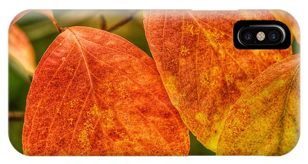 Autumn Leaves Phone Case by Kathi Isserman