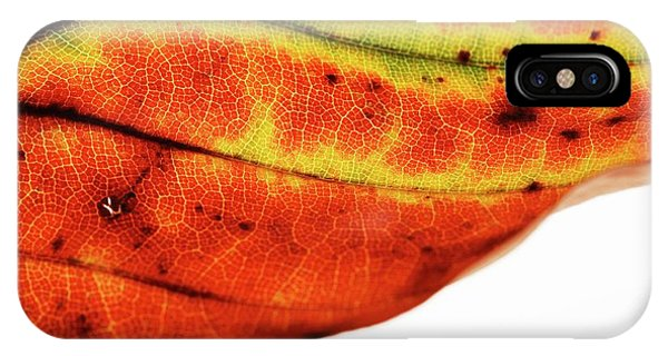 Backlit Autumnal Leaf Phone Case by Mauro Fermariello/science Photo Library