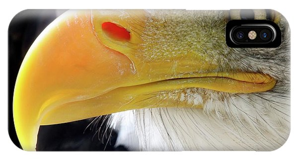 Bald Eagle Phone Case by John Devries/science Photo Library
