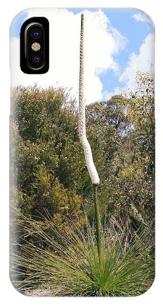 Monocotyledon iPhone Case - Balga (xanthorrhoea Preissii) by Adrian Thomas