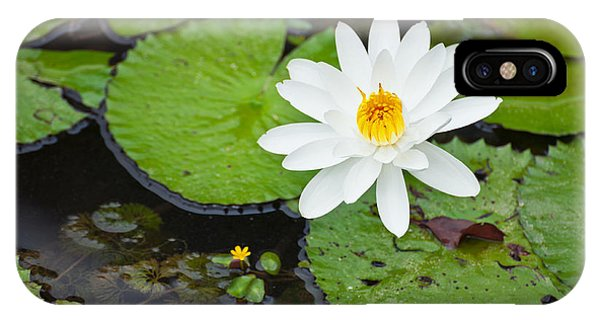 Lillie iPhone Case - Beautiful Water Lily  by U Schade