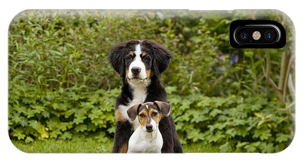 Bernese Mountain Dog iPhone Case - Bernese Mountain & Jack Russell Puppies by Jean-Michel Labat