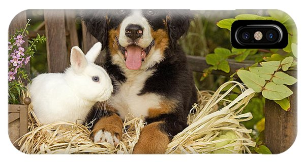 Bernese Mountain Dog iPhone Case - Bernese Mountain Puppy And Rabbit by Jean-Michel Labat