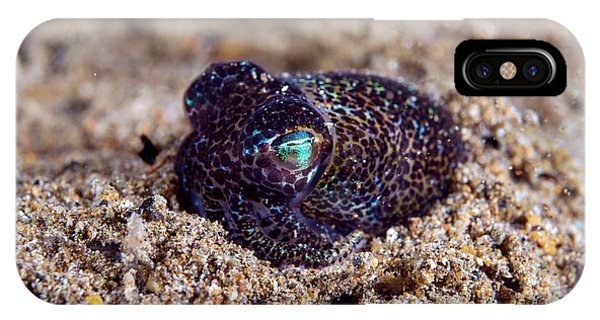 Squid iPhone Case - Berry's Bobtail Squid by Scubazoo/science Photo Library