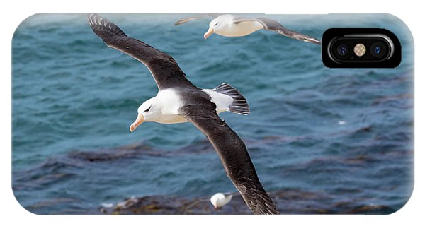 Archipelago iPhone Case - Black-browed Albatross (thalassarche by Martin Zwick