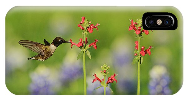 Scarlet iPhone Case - Black-chinned Hummingbird (archilochus by Rolf Nussbaumer
