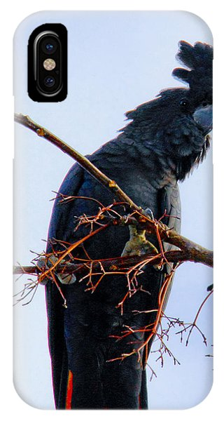 IPhone Case featuring the photograph Black Cockatoo by Debbie Cundy