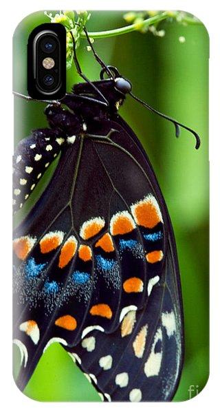 It Professional iPhone Case - Black Swollowtail  by Iris Richardson