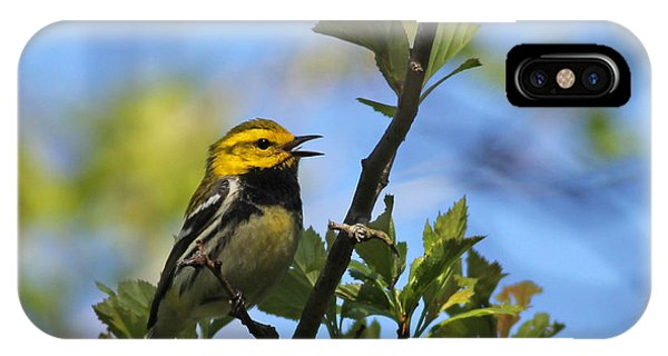 Black-throated Green Warbler IPhone Case
