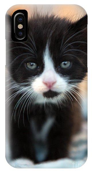 Kitten iPhone Case - Black And White Kitten by Iris Richardson
